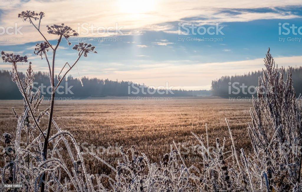 Paisaje pintoresco y luminoso con salida del sol en la fría mañana de otoño foto de stock libre de derechos