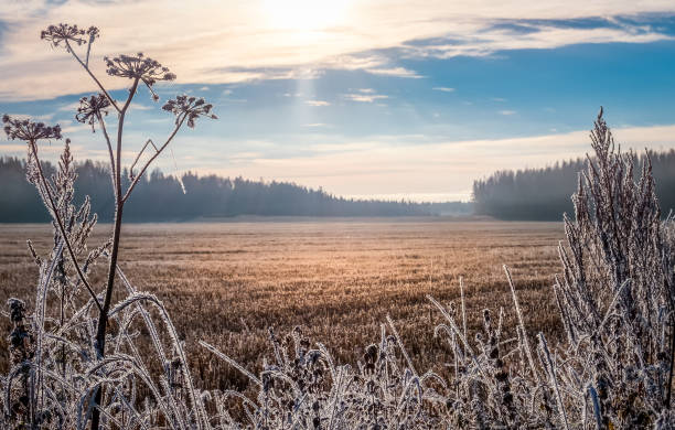 Scenic and bright landscape with sunrise at frosty autumn morning stock photo
