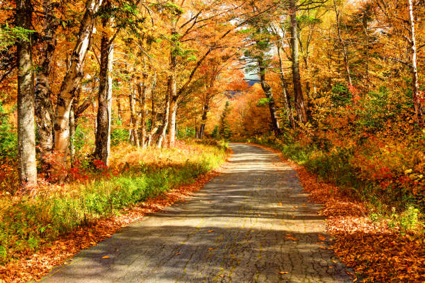 Scenic Autumn Road in the White Mountains of New Hampshire Scenic autumn road in the White Mountains of New Hampshire white mountain national forest stock pictures, royalty-free photos & images