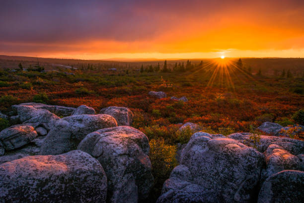 Scenic autumn sunset over heath barren stock photo
