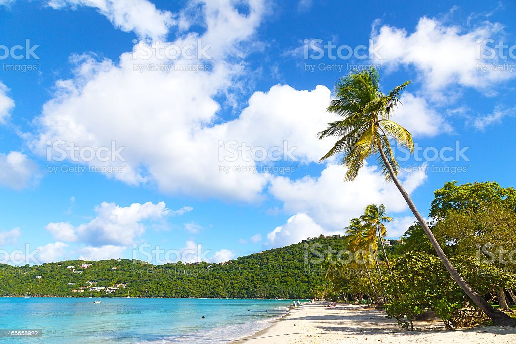 Scenic beach view with palms, pelicans and rolling waves. stock photo
