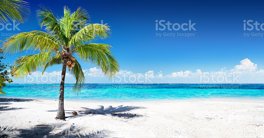 Scenic Coral Beach With Palm Tree stock photo