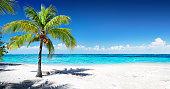 美しいコーラルのビーチでヤシの木