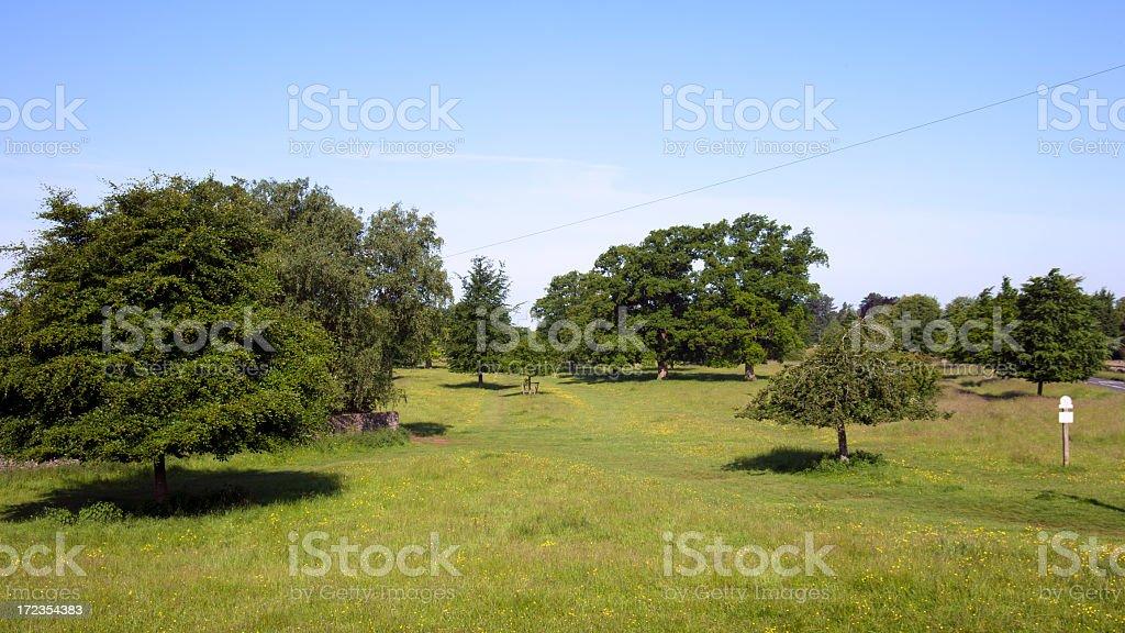 La pintoresca zona de Cotswolds-Minchinhampton común foto de stock libre de derechos