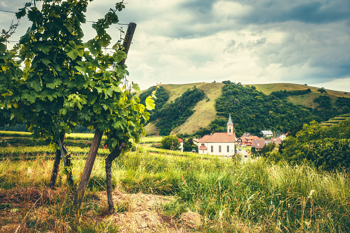 Scenic countryside landscape with forests, traditional houses and vineyards. Germany, Black Forest.