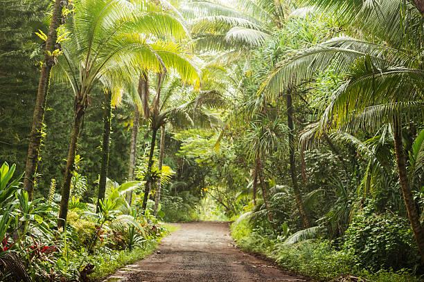 Scenic Empty Dirt Road in Rural Tropical Kona Hawaii  USA stock photo