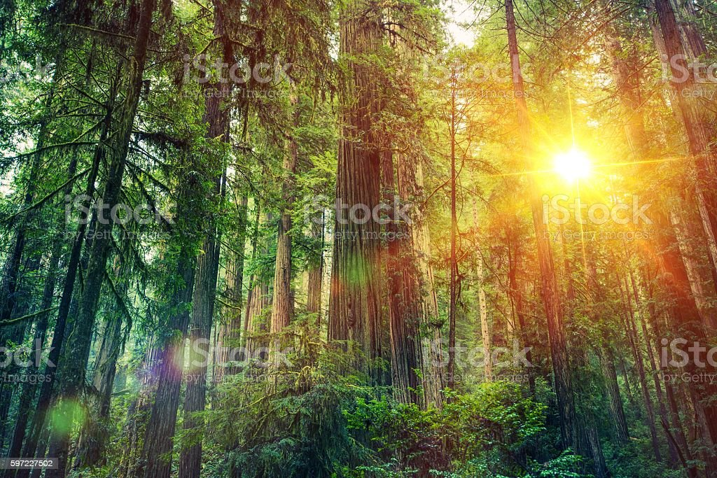 Scenic Forest Sunset stock photo
