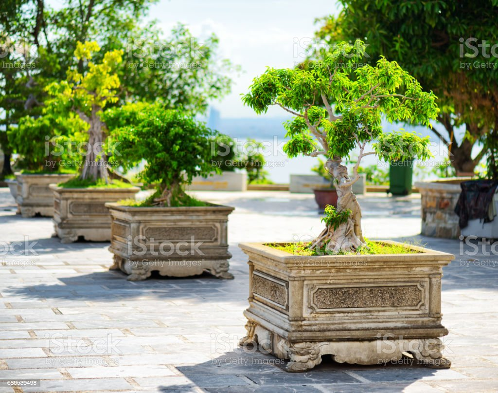 Scenic green Bonsai trees growing in pots outdoors foto stock royalty-free