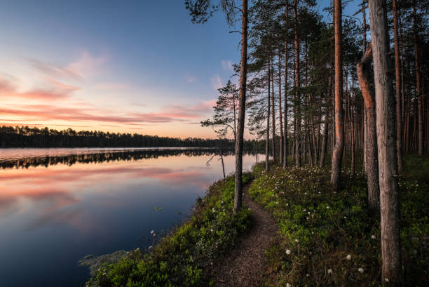 scenic lake view with idyllic path and sunset at peaceful evening in national park, finland - finland stock pictures, royalty-free photos & images