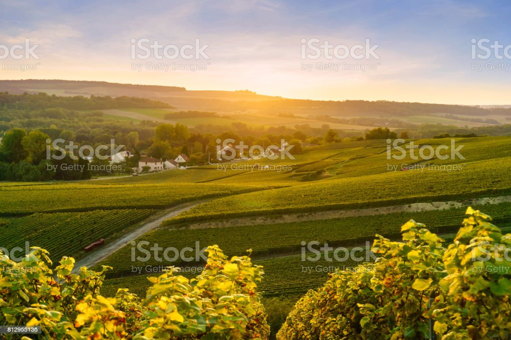 Scenic landscape in the Champagne at sunrise time, Vineyards in the Montagne de Reims, France stock photo