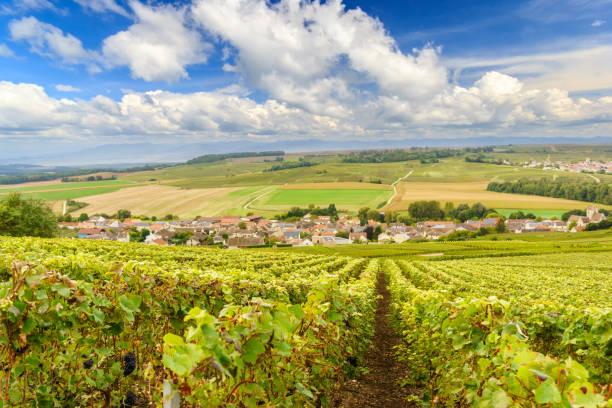 malerische landschaft in der champagne, weinberge in der montagne de reims, frankreich - traubensorten stock-fotos und bilder