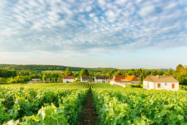 Scenic landscape in the Champagne, Vineyards in the Montagne de Reims, France Scenic landscape in the Champagne, Vineyards in the Montagne de Reims, France epernay stock pictures, royalty-free photos & images