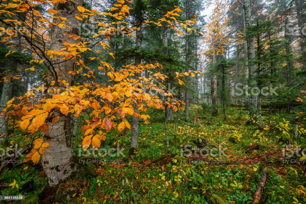 Scenic landscape of autumn forest royalty-free stock photo