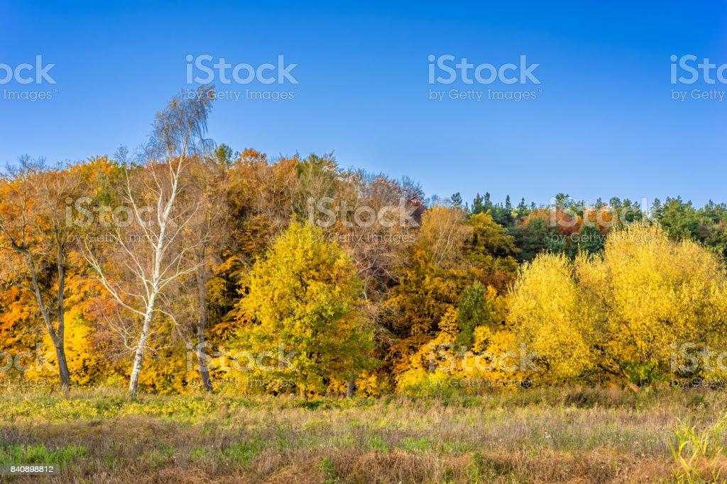 foto de Photo libre de droit de Paysage Dautomne La Forêt Avec Des Arbres ...