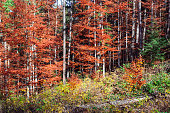 Scenic landscape of forest in fall. Carpathians