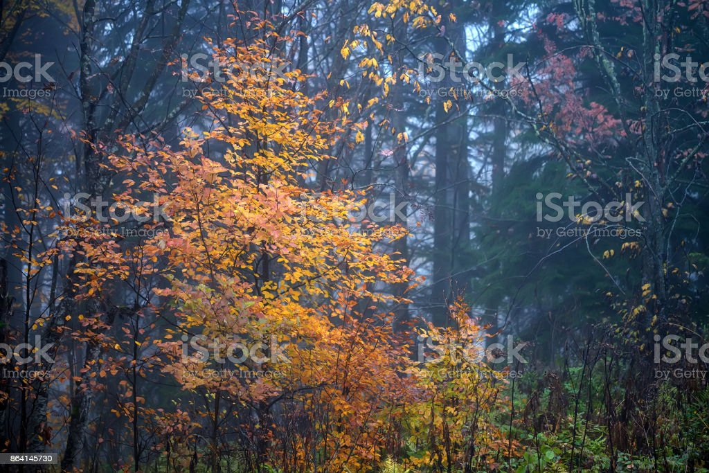 Scenic landscape of forest in the fall royalty-free stock photo