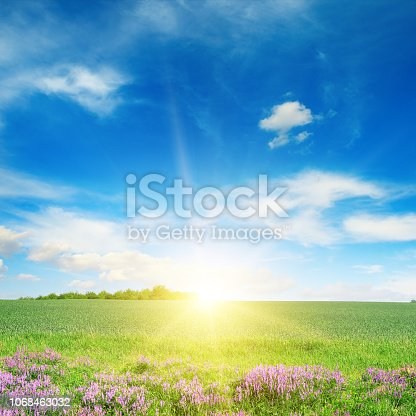 Scenic landscape of green spring wheat field and blue sky.