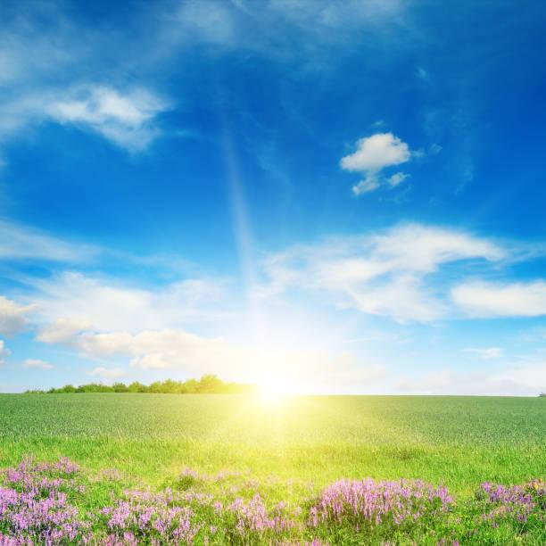 綠色春小麥田景觀 - 晴朗 個照片及圖片檔