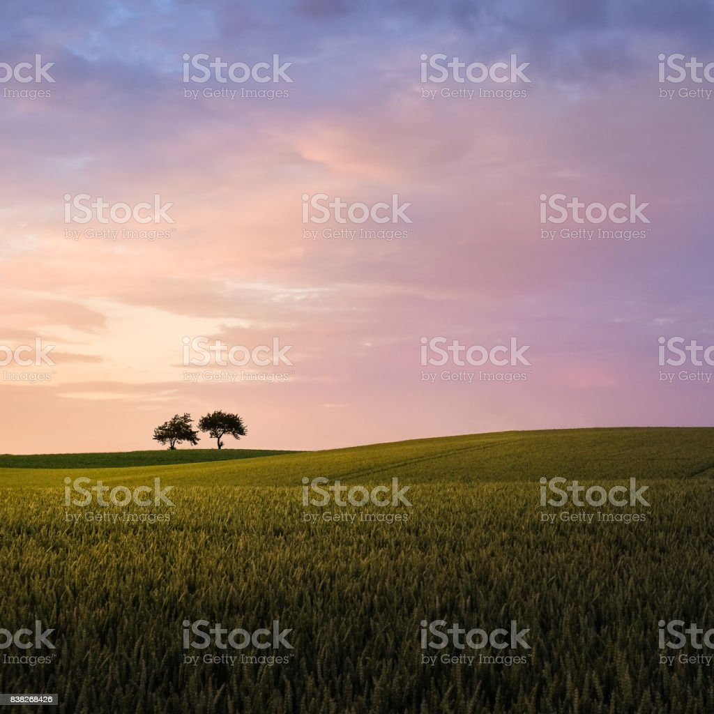 Scenic landscape with sunset an two trees at summer evening stock photo