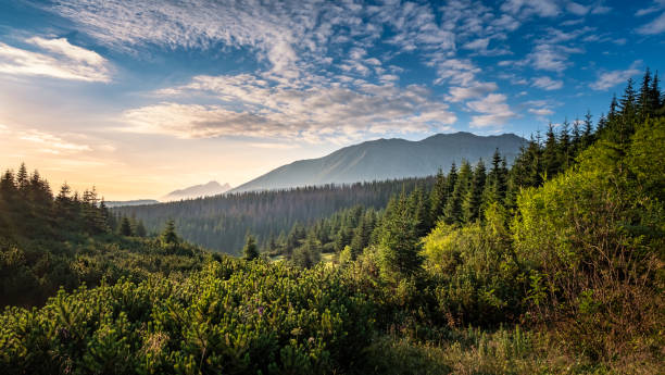 scenic mountain view with mood sunrise at summer morning in tatra national park, poland - evergreen tree stock photos and pictures