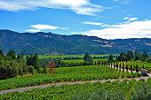View of scenic Napa Valley in California