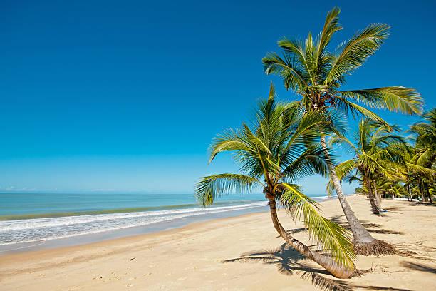 Scenic palm lined beach with clear blue sky and water picture id186045737?b=1&k=6&m=186045737&s=612x612&w=0&h=5rkawtd9vprzejoga9  lrq9wngmncs fnzxipojaui=