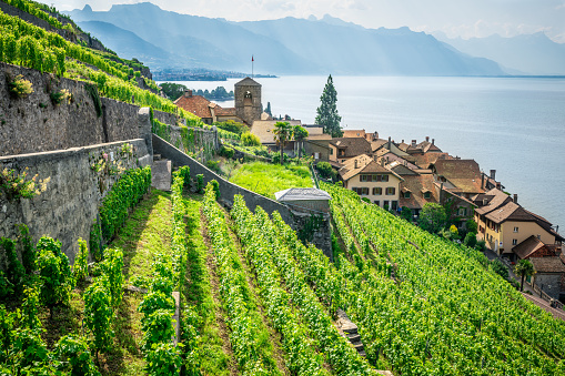 Scenic panorama of Lavaux with the Saint-Saphorin village green terraced vineyards and Geneva lake surrounded by mountains in Lavaux Vaud Switzerland