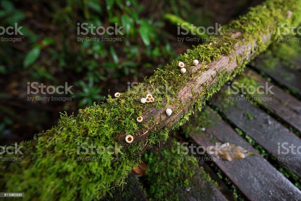 Scenic pathway stock photo