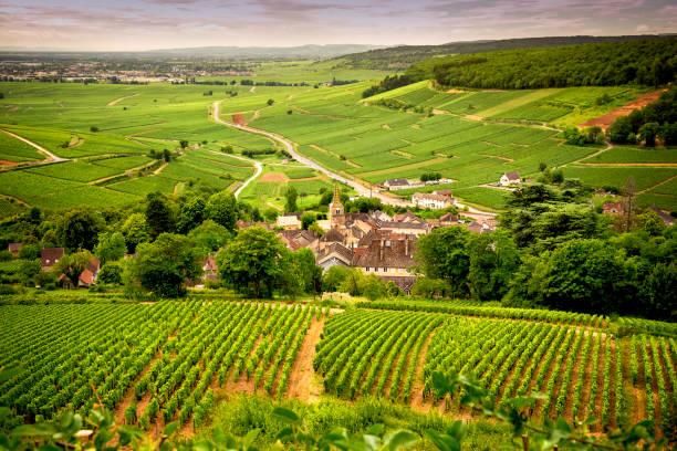 burgund - corton: panoramastraße, die kreuze der weinregion und führt uns zu den wichtigsten produzenten und ihre weinberge in der nähe von corton. frankreich - bordeaux wein stock-fotos und bilder