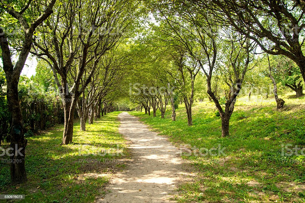 Scenic road through green forest stock photo