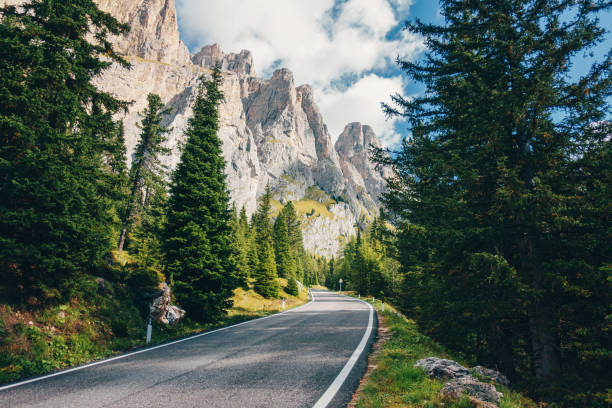 scenic road through the forest in the dolomites alps, italy - dolomiti foto e immagini stock
