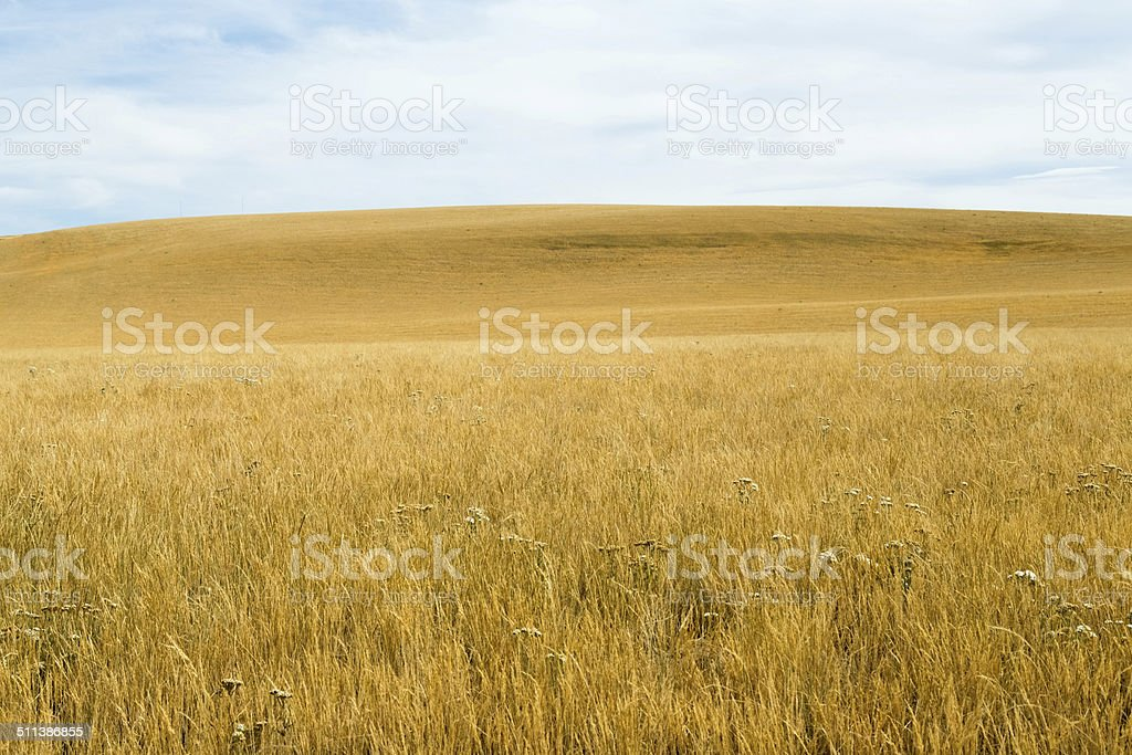 Scenic: Rolling Hills with dried out grass in summer stock photo