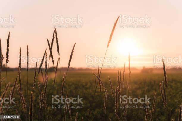 Scenic rural saskatchewan picture id900528626?b=1&k=6&m=900528626&s=612x612&h=gbzrjihhrtg87d7k9v0npgovel7 s5gmrmmujgzu540=