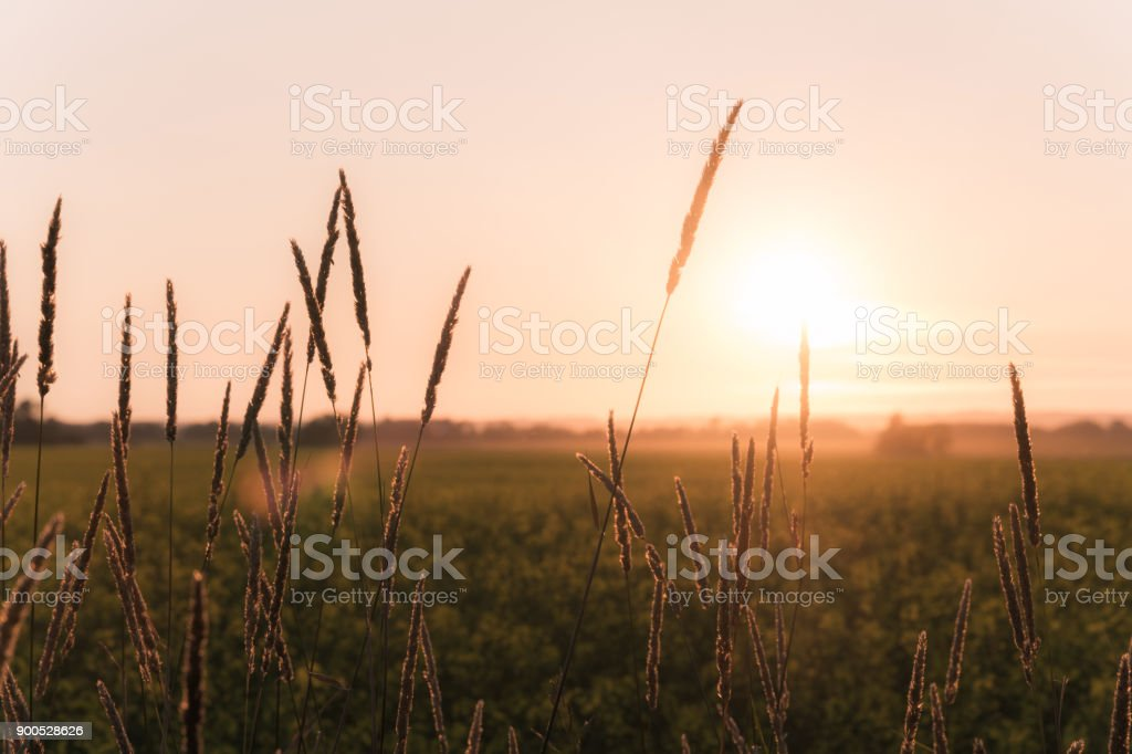 Scenic rural Saskatchewan stock photo