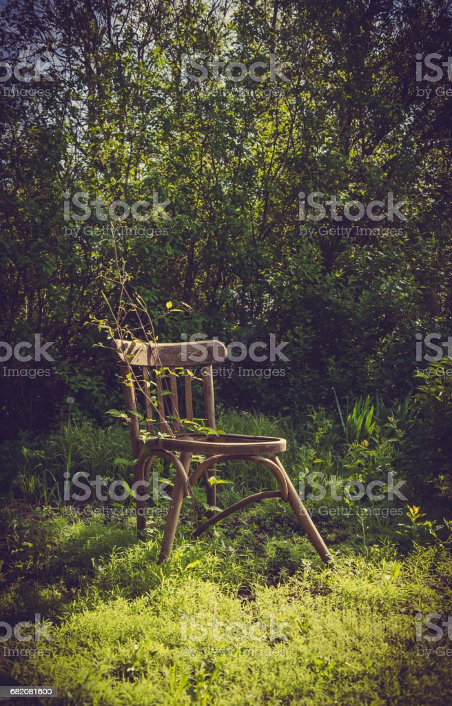 Fine Scenic Rustic Garden Old Wooden Chairs And Lush Vegetation Stock Photo Download Image Now Frankydiablos Diy Chair Ideas Frankydiabloscom