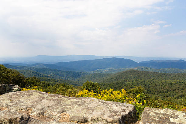 Scenic Shenandoah National Park Photo was taken in the Shenandoah National Park, Virginia. During the late fall, all the leaves turn red in Shenandoah mountains and are very beautiful. charlottesville stock pictures, royalty-free photos & images