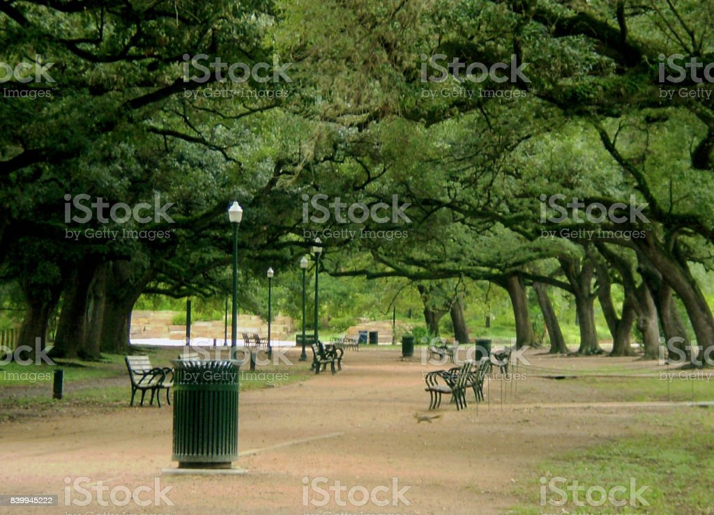 Scenic Southern Live Oak Canopy Over Popular Houston Exercise Trail stock photo