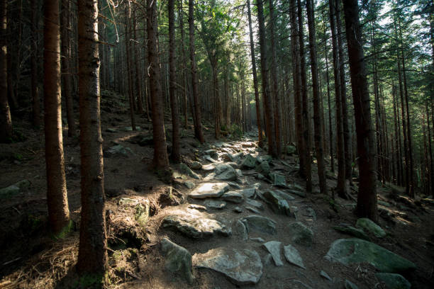 Scenic stone road in a mountain dark forest lit by the sun stock photo