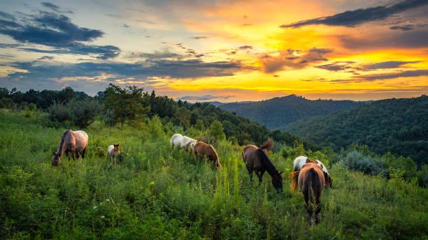 Scenic summer sunset with wild horses. stock photo