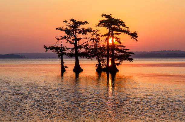 Scenic sunrise and cypress trees stock photo