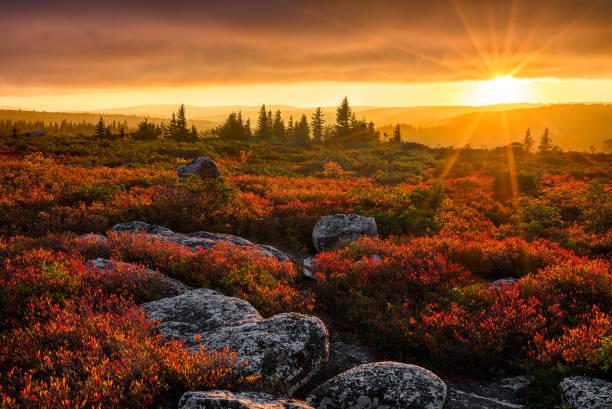 Scenic sunset over heath barren in autumn stock photo