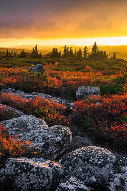 Scenic sunset over red heath stock photo