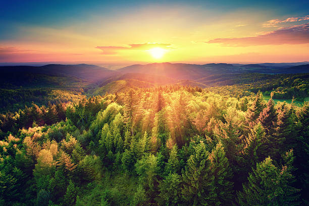 scenic sunset over the forest - majestueus stockfoto's en -beelden