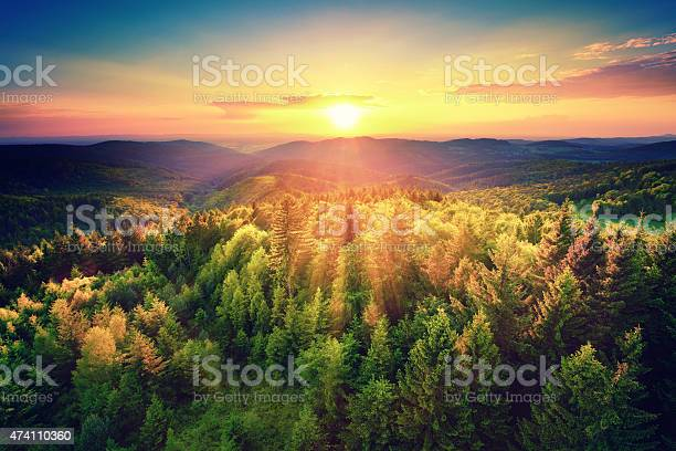 Photo of Scenic sunset over the forest