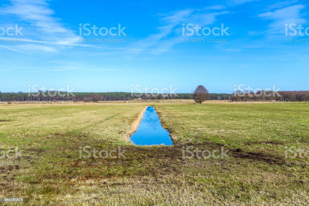 scenic swamp land with trees in Usedom royalty-free stock photo