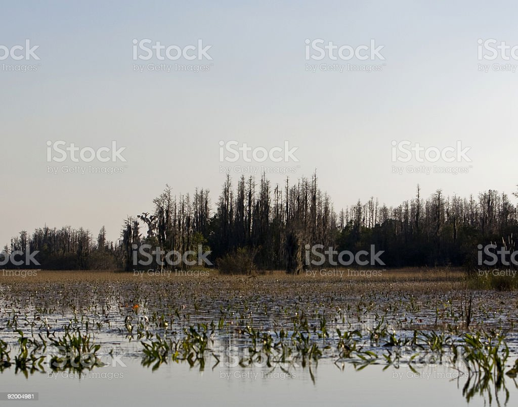 scenic swamp scene in okefenokee wildlife refuge stock photo