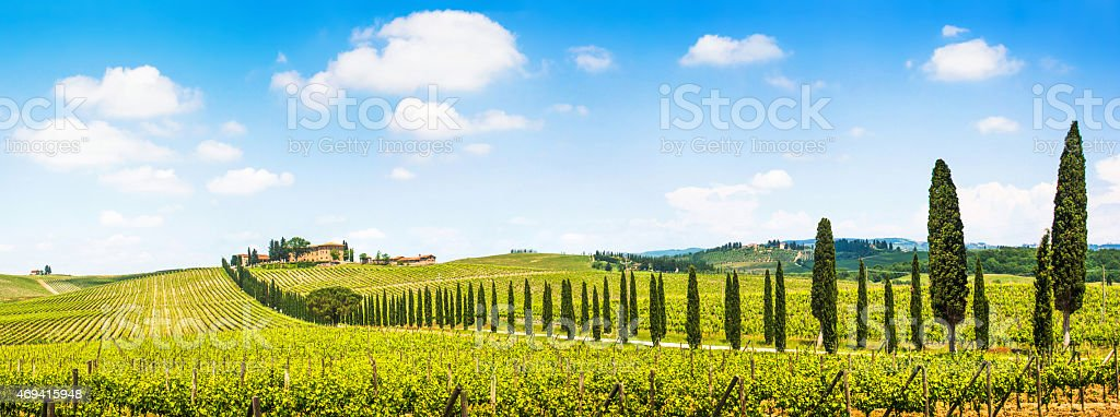 Scenic Tuscany landscape panorama with vineyards stock photo