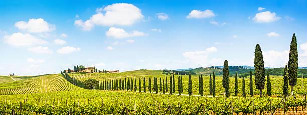 malerische landschaft mit weingütern panorama der toskana - ferienhaus toskana stock-fotos und bilder