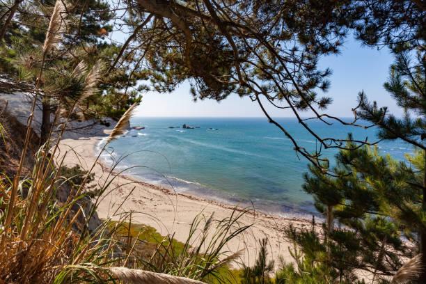 vacker utsikt vid stilla havet, greyhound rock county park, santa cruz county california - fur bildbanksfoton och bilder