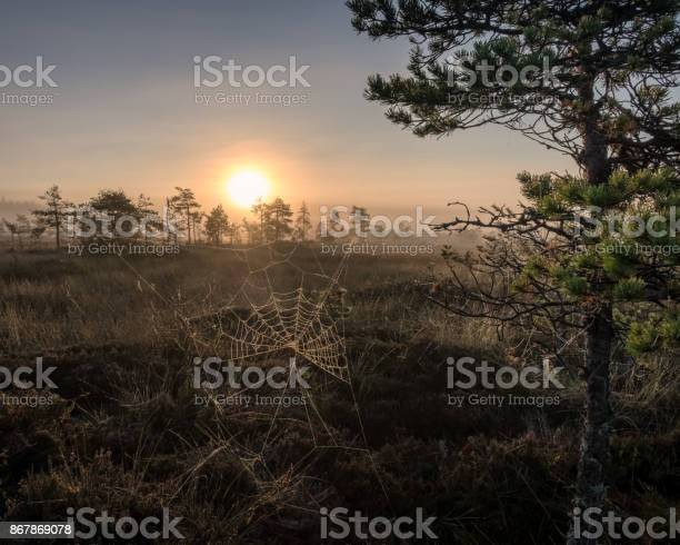 Photo of Scenic view from swamp at autumn morning in Torronsuo National park, Finland
